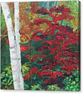Birch Trees In Red Canvas Print