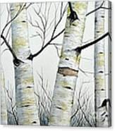 Birch Trees In The Forest By Christopher Shellhammer Canvas Print