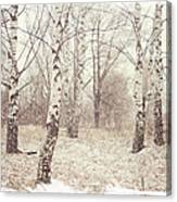 Birch Trees In The Snow. Winter Poems Canvas Print