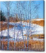 Birches And Cattails Canvas Print