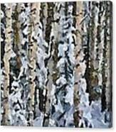 Birches In The Winter Canvas Print