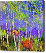Birchtrees 56412 Canvas Print