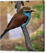Bird 6 Canvas Print