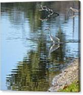Bird And Pond Canvas Print