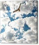 Bird And The Clouds Canvas Print