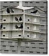 Bird Apartment House Canvas Print