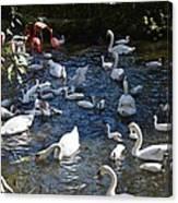 Bird Bash Canvas Print