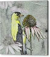 Bird Eating Seeds For One Digital Art Canvas Print