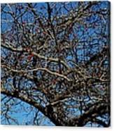 Bird Feed Canvas Print