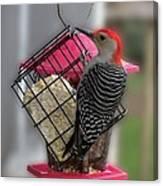 Bird Feeder Wp 06 Canvas Print