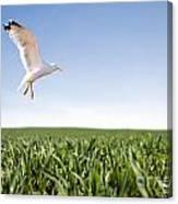 Bird Flying Over Green Grass Canvas Print
