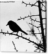 Bird In B And W Canvas Print