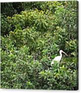 Bird In Bush Canvas Print