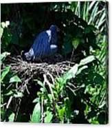 Bird In Nest Canvas Print