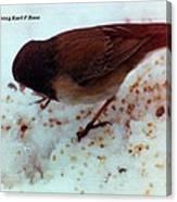 Bird In Snow 2 Canvas Print