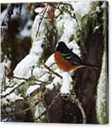 Bird In Snow Canvas Print
