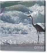 Bird In Surf Canvas Print