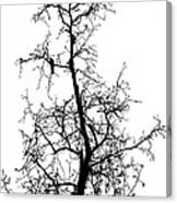 Bird In The Branches Canvas Print
