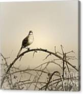 Bird In The Briar Canvas Print