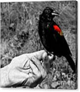 Bird In The Hand.seattle.bw Canvas Print