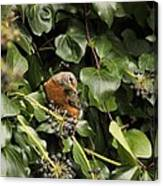 Bird In The Ivy Canvas Print