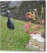 Bird In Yard Canvas Print
