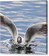 Bird Landing Canvas Print