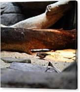 Bird - National Aquarium In Baltimore Md - 121216 Canvas Print