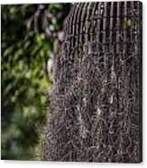 Bird Nest Tree Canvas Print