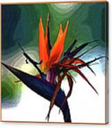Bird Of Paradise Flower Fragrance Canvas Print
