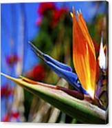 Bird Of Paradise Open For All To See Canvas Print