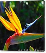 Bird Of Paradise Plant Canvas Print