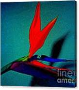 Bird Of Paradise With Blue Background Canvas Print