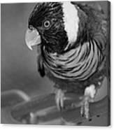 Bird On A Chain Canvas Print