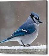 Bird On A Fence Canvas Print