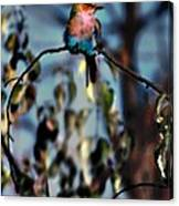 Bird On A Limb Canvas Print