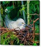 Bird On A Nest Canvas Print