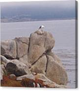 Bird On A Rock Canvas Print
