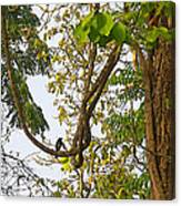 Bird On A Vine In Jungle Forest In Chitwan Np-nepal  Canvas Print