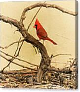 Bird On A Vine Canvas Print