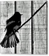 Bird On A Wire I Canvas Print