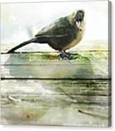 Bird On The Deck Canvas Print