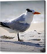 Bird On The Shoreline Canvas Print