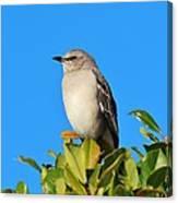 Bird On Tree Top Canvas Print