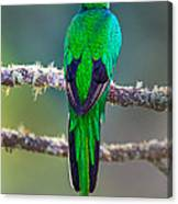 Bird Perching On A Branch, Savegre Canvas Print