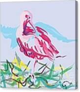 Bird Red Ibis Canvas Print