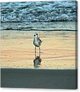 Bird Reflection Canvas Print