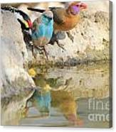Bird Reflection Of Beauty Canvas Print