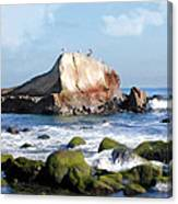 Bird Sentry Rock At Dana Point Harbor Canvas Print