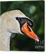 Bird - Swan - Mute Swan Close Up Canvas Print